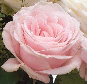 Roses (2)